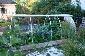what to grow in a winter garden the survive and thrive boomer guide