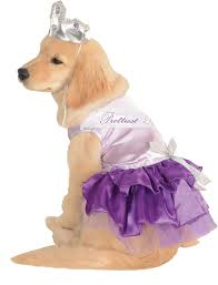 really cute halloween costumes for dogs