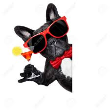 french bulldog dog holding martini cocktail glass ready to have