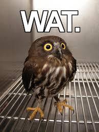 Owl Memes - owl wat know your meme