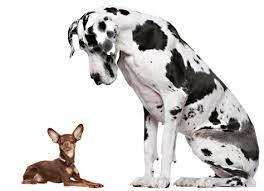 american eskimo dog for sale in colorado find puppies for sale dogs for sale dogs for adoption dog