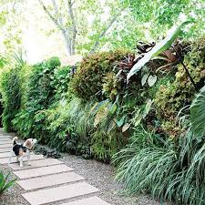 how to plant a lush living wall vertical garden wall