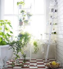 Ikea Plant Ideas by 124 Best House Plants Images On Pinterest Plants Home And