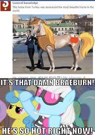 Stupid Sexy Meme - 319713 beautiful horse braeburn edit irl meme photo finish