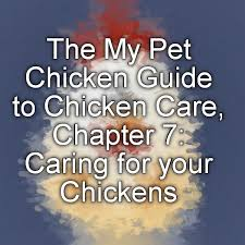 169 best for my chickens images on pinterest backyard chickens