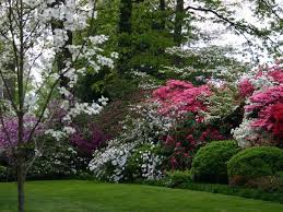 Good Backyard Trees by Best 25 Shrubs For Privacy Ideas On Pinterest Privacy Trees