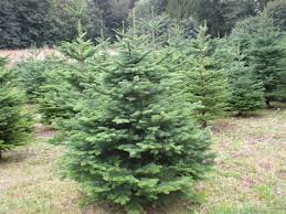 artificial trees noble fir with others noble fir