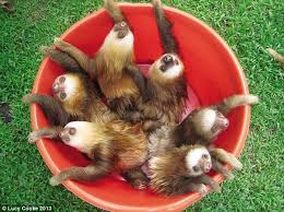 sloth inc home