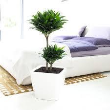 grünpflanzen im schlafzimmer newsletter übersicht grünpflanzen für jeden standort