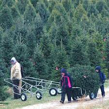 choose and cut christmas trees at dull u0027s tree farm u0026 pumpkin patch