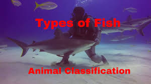 types of fish animal classification youtube