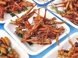 insectes cuisine insectes superaliments du futur