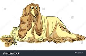 afghan hound vector color sketch dog afghan hound stock vector 86441188