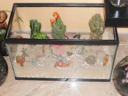 pictures of big glass terrariums