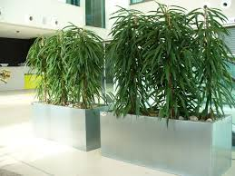 Office Plants Live Indoor And Interior Office Planting Schemes Rental Plants In
