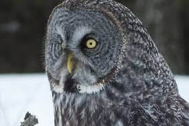 Argumentative Essay On Abortion Examples Argumentative Essay Sample Owl