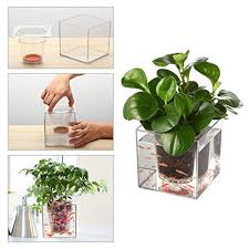 diy self watering herb garden garden fish tank pathonor transparent self watering pot wall