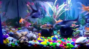 Home Aquarium My Home Aquarium Youtube