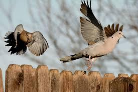 a photo id quiz that u0027s perfect for beginner birders audubon