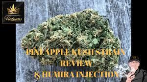 wedding cake leafly pineapple kush strain review humira injection