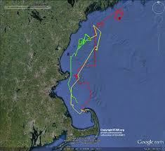 200 dolphins in cape cod bay plus 3 on my screen ifaw