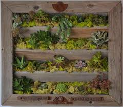 best 25 living wall planter ideas on pinterest succulent wall