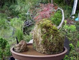 native plant nursery oregon bonsai u2013 native habitat nursery native habitat nursery