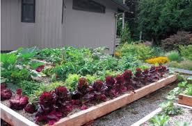 grow up build an edible rooftop garden garden therapy
