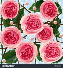 100 english rose flower rosa u0027summer song u0027 english