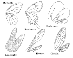 insect wings template by arnatornwolf on deviantart