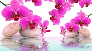 flowers reflection water pink day reflections spa orchid beautiful