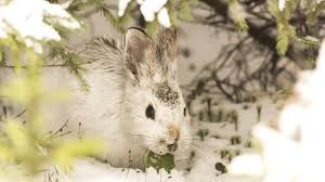 bunny tag wallpapers bunny cute rabbit little baby animals
