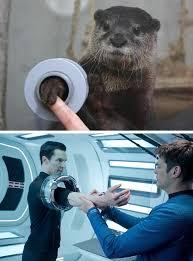 Benedict Cumberbatch Otter Meme - otterbatch set phasers to lol sci fi fantasy