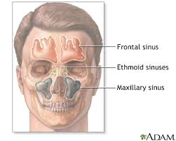 can sinus infection cause dizziness light headed sinus infection bronchitis south county internal medicine