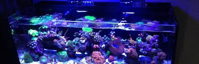 reef tank lighting schedule radion schedule fish tank projects