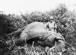 elephant gun wikipedia