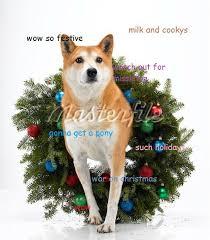Christmas Doge Meme - christmas doge meme doge pinterest doge meme doge and meme
