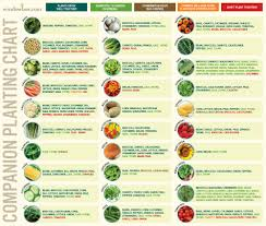 herb growing chart companion planting chart for vegetables