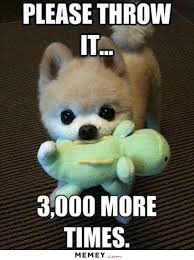 Cute Dog Memes - dog memes funny dog pictures memey com page 3