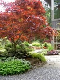 garden designs japanese maple tree garden design japanese maple