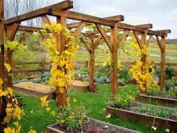 grape vine trellis image u2013 outdoor decorations