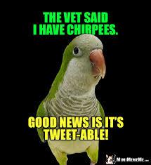 Funny Bird Memes - sick bird joke the vet said i have chirpees good news is it s