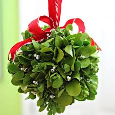 christmas mistletoe mistletoe is a christmas tradition redlands daily facts