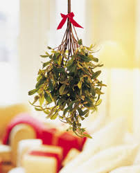 how did mistletoe come to be associated with christmas