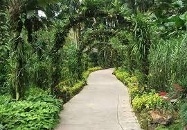 luxury tropical garden designs concept backyard a tropical garden