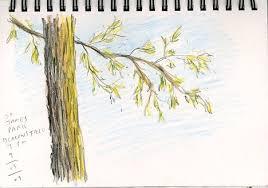 sketches colored pencil studies