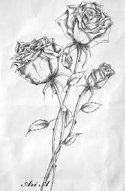 614 best roses images on pinterest drawings flowers and rose