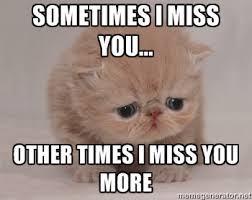 Miss You Meme - i miss you meme cat image memes at relatably com