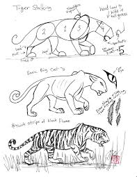 draw a tiger by diana huang on deviantart