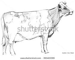 sketch animal stock images royalty free images u0026 vectors